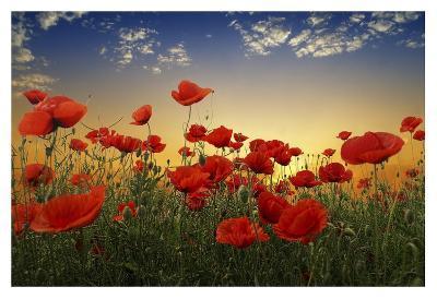 Poppies--Giclee Print