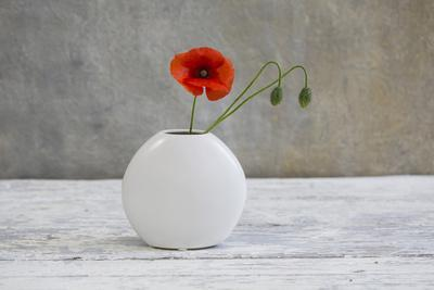 Poppy Blossom and Buds in White Vase-Andrea Haase-Photographic Print