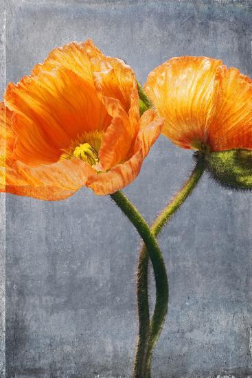 Poppy, Blossoms, Still Life-Axel Killian-Photographic Print