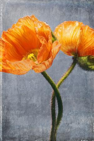 https://imgc.artprintimages.com/img/print/poppy-blossoms-still-life_u-l-q11wwzt0.jpg?p=0