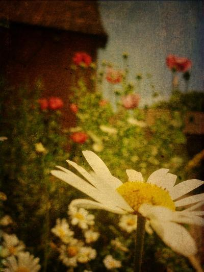 Poppy Days-Emma Kahane-Photographic Print