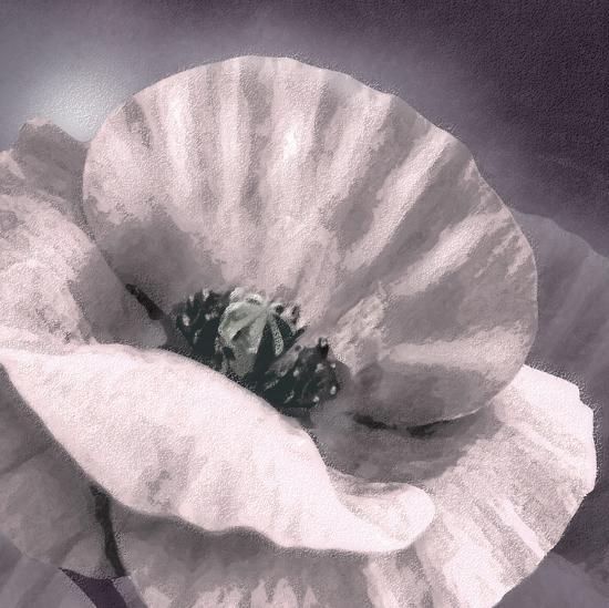 Poppy Dusk I-Lucy Meadows-Giclee Print