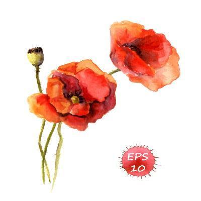 Poppy Flower. Watercolor Vector. Vintage Botanical Illustration-Le Panda-Art Print