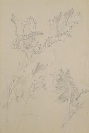 https://imgc.artprintimages.com/img/print/poppy-leaves_u-l-pje6rp0.jpg?p=0