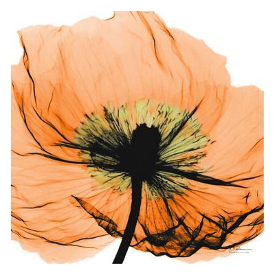 https://imgc.artprintimages.com/img/print/poppy-orange_u-l-f5ltu40.jpg?p=0