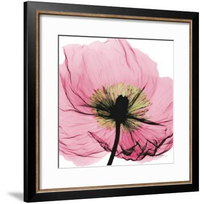 Poppy Pink-Albert Koetsier-Framed Art Print