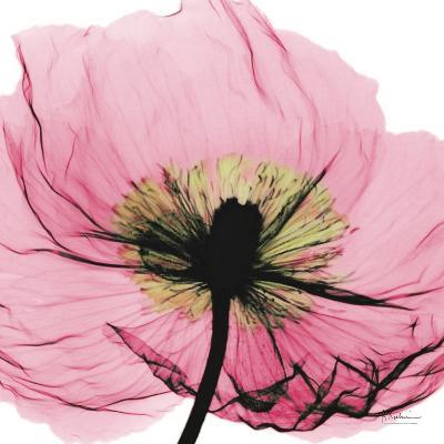 Poppy Pink-Albert Koetsier-Art Print