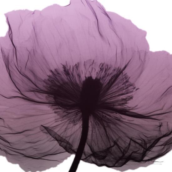 Poppy Purple-Albert Koetsier-Art Print