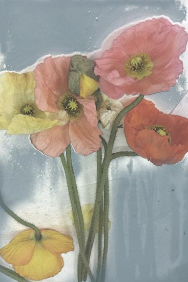 Poppy Spray II-Jennifer Goldberger-Art Print