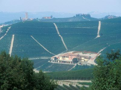 https://imgc.artprintimages.com/img/print/popular-wine-region-in-the-piemonte-italy_u-l-p2xeez0.jpg?p=0