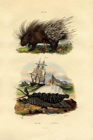 Porcupine, 1833-39