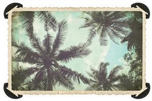 Vintage Palms by Port 106 Project