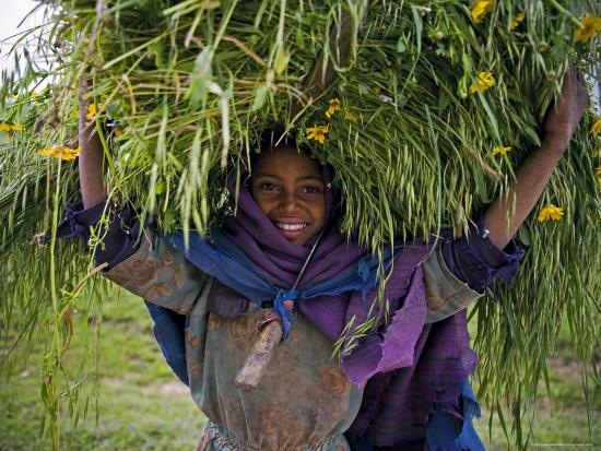 Portait of Local Girl Carrying a Large Bundle of Wheat and Yellow Meskel Flowers, Ethiopia-Gavin Hellier-Photographic Print