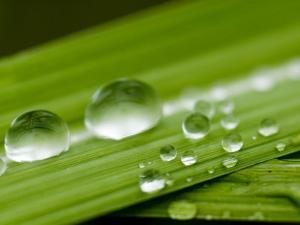 Water Droplets on Grass, Dali, Yunnan, China by Porteous Rod