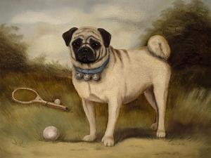 A Pug in Court by Porter Design