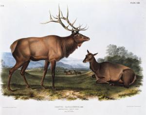 American Elk by Porter Design