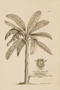 Banana Tree by Porter Design