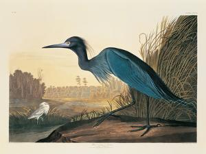 Blue Crane or Heron Plate 307 by Porter Design