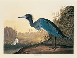 Blue Crane or Heron Plate 307 by Porter Design