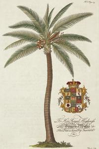 Coconut Palm by Porter Design