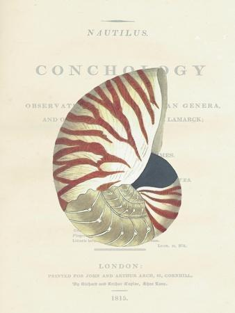 Conchology Nautilus
