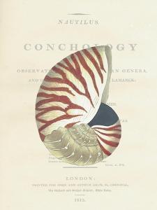 Conchology Nautilus by Porter Design