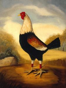 Fighting Cocks 1, Alexandra Churchill by Porter Design