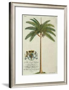 King Palm by Porter Design
