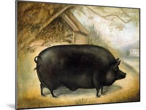 Large Black Pig by Porter Design