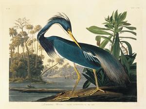 Louisiana Heron Plate 217 by Porter Design