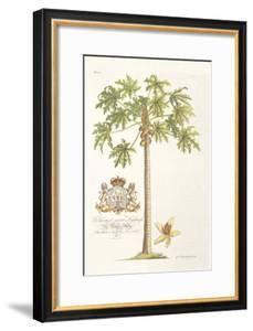 Papaya Tree by Porter Design