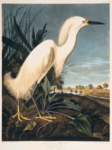 Snowy Heron or White Egret by Porter Design