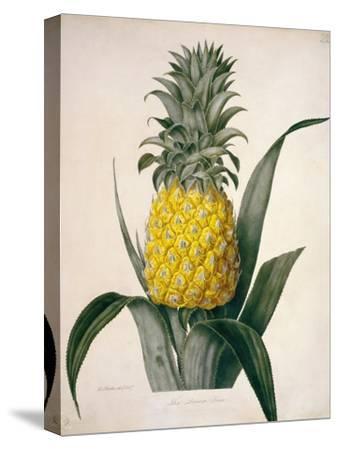 The Queen Pineapple