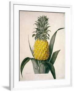The Queen Pineapple by Porter Design