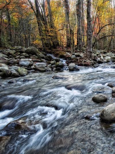 Porter's Creek I-Danny Head-Photographic Print