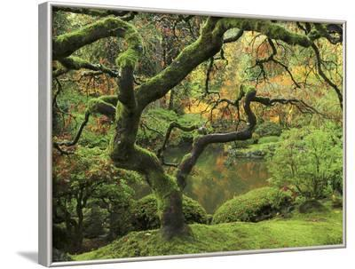Portland Japanese Garden in Early Autumn: Portland Japanese Garden, Portland, Oregon, USA-Michel Hersen-Framed Photographic Print