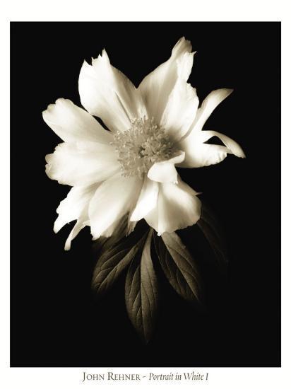 Portrait in White I-John Rehner-Art Print