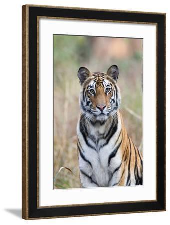 Portrait of a Bengal Tiger, Panthera Tigris Tigris-Roy Toft-Framed Photographic Print