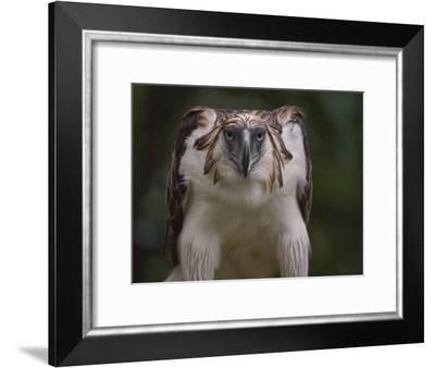 Portrait of a captive Philippine eagle-Klaus Nigge-Framed Photographic Print