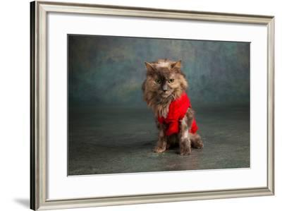 Portrait of a Cat--Framed Photographic Print