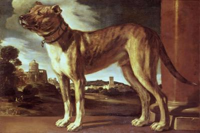 Portrait of a Dog-Guglielmo Ciardi-Giclee Print