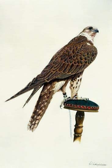 Portrait of a Female Saker Falcon, 1988-Mary Clare Critchley-Salmonson-Giclee Print