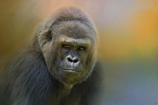Portrait of a Gorilla-Jai Johnson-Giclee Print