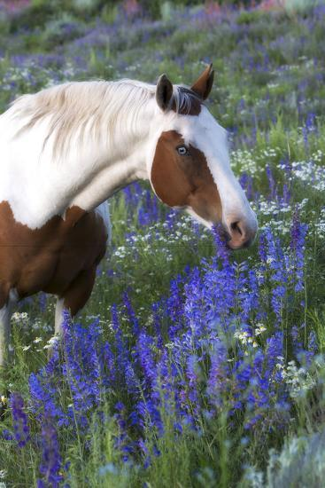 Portrait of a Horse in a Field of Purple Wildflowers-Robbie George-Photographic Print