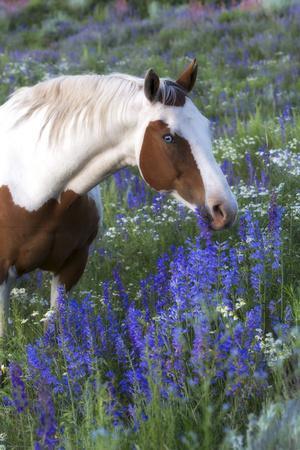 https://imgc.artprintimages.com/img/print/portrait-of-a-horse-in-a-field-of-purple-wildflowers_u-l-pio4sw0.jpg?p=0