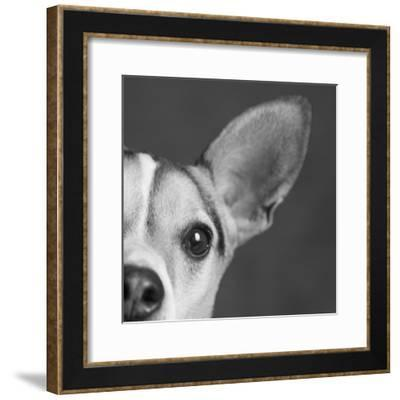 Portrait of a Jack Russell Terrier Dog-Panoramic Images-Framed Photographic Print