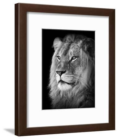 Portrait Of A Lion In Black And White-Reinhold Leitner-Framed Photographic Print