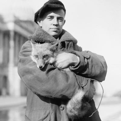 Portrait of a Man Holding His Pet Fox in Washington DC, 1918--Photographic Print