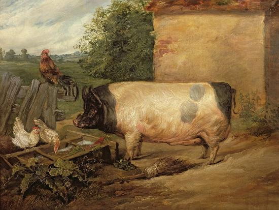 Portrait of a Prize Pig, Property of Squire Weston of Essex, 1810-Edwin Henry Landseer-Giclee Print