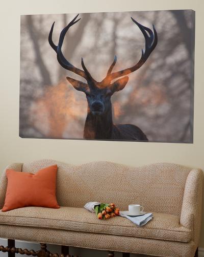 Portrait of a Red Deer Buck, Cervus Elaphus, in Winter-Alex Saberi-Loft Art